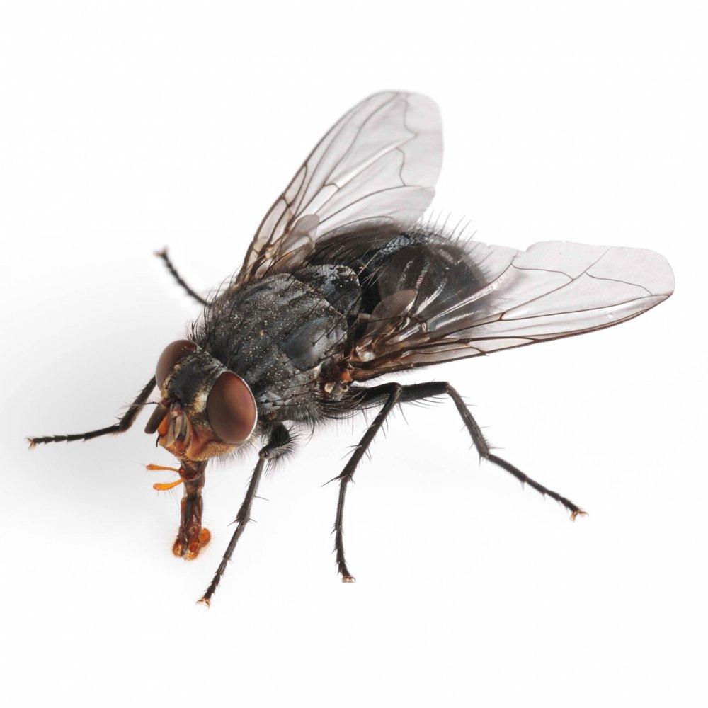 kan kakkelakker flyve